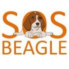 SOS Beagle - awatar