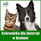 Schronisko dla Bezdomnych Zwierząt w Koninie - awatar