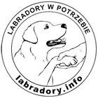 Labradory.info - awatar