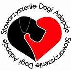 Stowarzyszenie Dogi- Adopcje - awatar