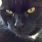 Koci Świat - awatar