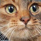 Kocie Warpno - awatar