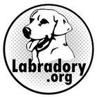labradory.org - awatar