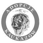 Adopcje kaukazów - awatar