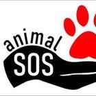 Animal Sos - awatar