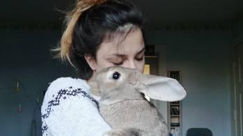 Wpis Dobro wraca!! Zebrali 3400 zł w 9 dni na leczenie ukochanego królika! - miniaturka zdjęcia