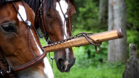 Zdjęcie opisu zbiórki Ratujmy konie z Morskiego Oka!