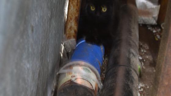 Zdjęcie opisu zbiórki Kocięta ze śmieciowiska