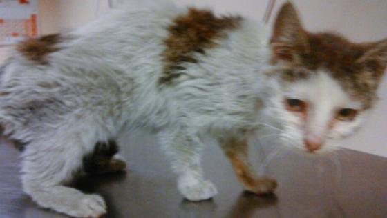 Zdjęcie opisu zbiórki Zagłodzona koteczka