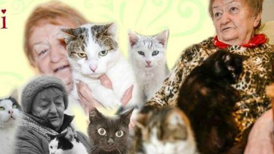 Zdjęcie opisu zbiórki Pomóż ponad 30 kotom!