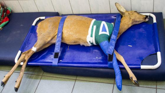 Zdjęcie opisu zbiórki Leczenie zwierząt
