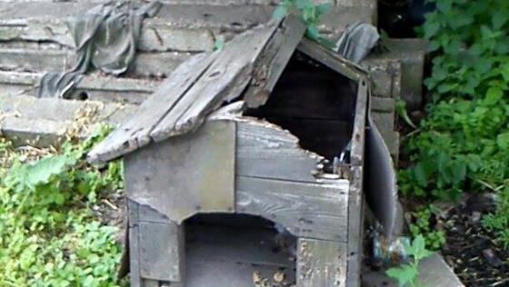 Zdjęcie opisu zbiórki Bojkotujemy krzywdzenie zwierząt