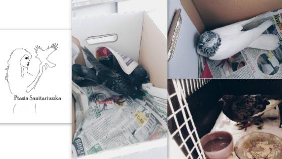 Zdjęcie opisu zbiórki Leczenie ptaków miejskich