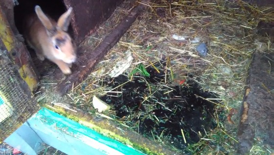 Zdjęcie opisu zbiórki 2 interwencje, 36 królików