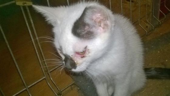 Zdjęcie opisu zbiórki Wysyp chorych kociąt - pomocy!