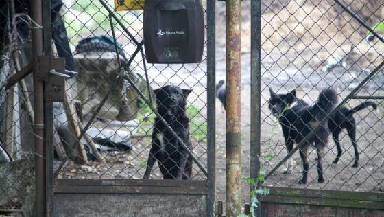 Zdjęcie opisu zbiórki Głodne psy i koty