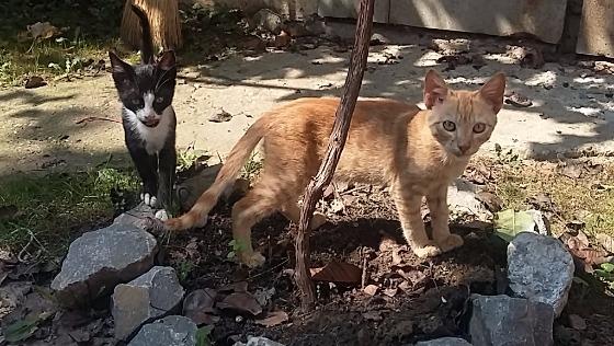 Zdjęcie opisu zbiórki Sterylizacja bałkańskich kotek!