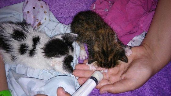 Zdjęcie opisu zbiórki Kociaki zbierają na lepsze życie