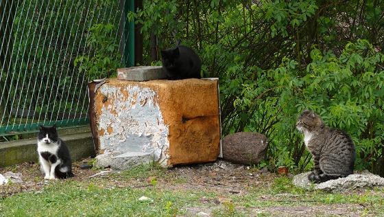 Zdjęcie opisu zbiórki Nakarm miejskie koty.