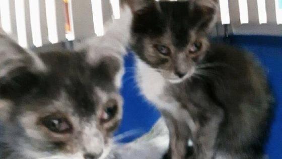 Zdjęcie opisu zbiórki Radomskie Koty Ulicy...