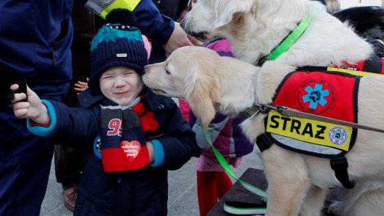Zdjęcie opisu zbiórki Nowe auto dla psów ratowniczych!
