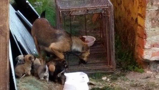 Zdjęcie opisu zbiórki Suka i 6 szczeniaków