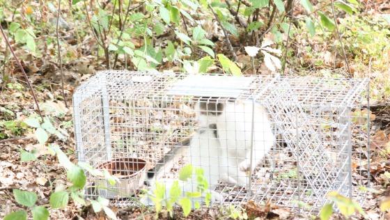 Zdjęcie opisu zbiórki Klatki do odławiania kotów