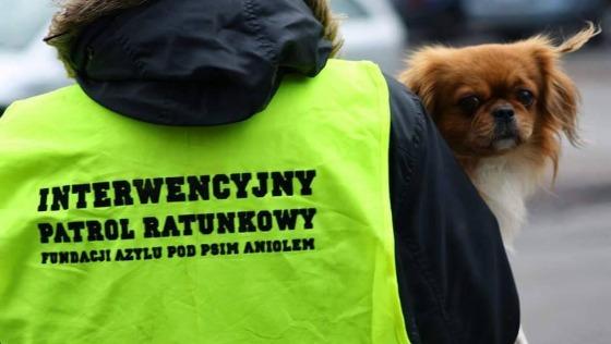Zdjęcie opisu zbiórki Psy potrzebują pomocy!