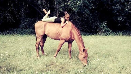 Zdjęcie opisu zbiórki Madoksu  - koń łamiący zasady