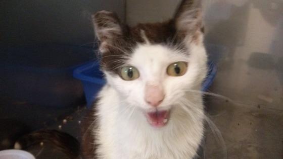 Zdjęcie opisu zbiórki Moli - kotka z chorymi jelitami