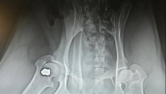Zdjęcie opisu zbiórki Bestialsko postrzelony Michaś