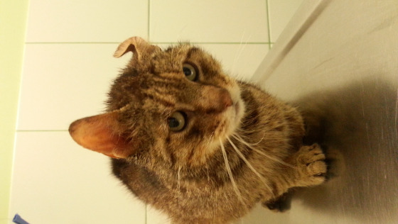 Zdjęcie opisu zbiórki Kot wyrzucony w kartonie
