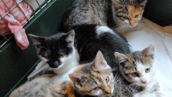 Zdjęcie opisu zbiórki Pomóż Pani Józefie i jej kotom