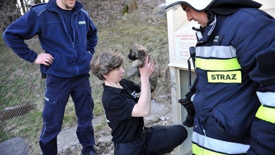 Zdjęcie opisu zbiórki Inspektorat ds. ochrony zwierząt