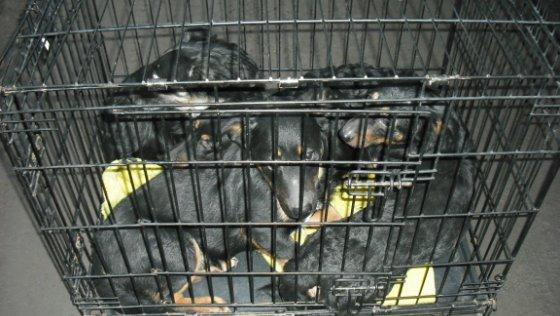 Zdjęcie opisu zbiórki Ratunek dla bezdomnych psów