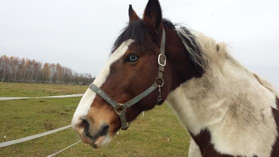 Zdjęcie opisu zbiórki Pastwisko dla koni