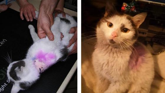 Zdjęcie opisu zbiórki Sugar - zjadany żywcem kotek