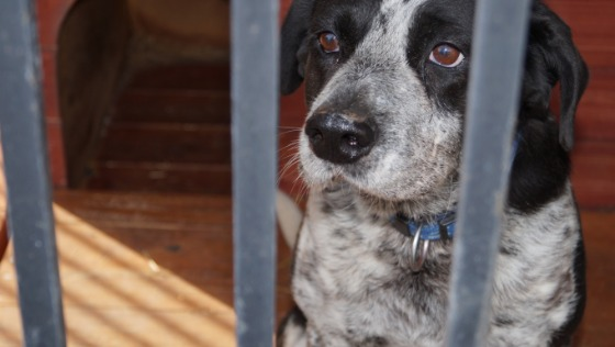Zdjęcie opisu zbiórki Psy marzą o wyjściu z boksu