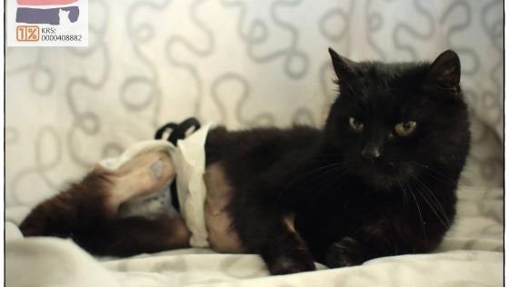 Zdjęcie opisu zbiórki Kocia renta dla Grani
