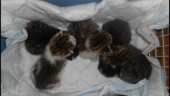 Zdjęcie opisu zbiórki Glutki - takie kocie dzieciaki