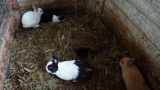 Zdjęcie opisu zbiórki Pomoc dla królików z interwencji