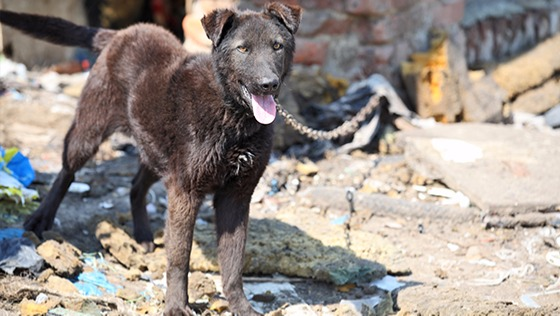 Zdjęcie opisu zbiórki Dramat 11 psów i chorego chłopca