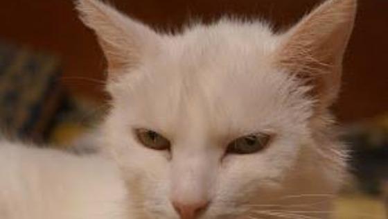 Zdjęcie opisu zbiórki Sisi - białe nieszczęście