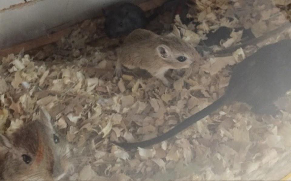 Zbiórka Myszoskoczki chcą być szczęśliwe - zdjęcie główne