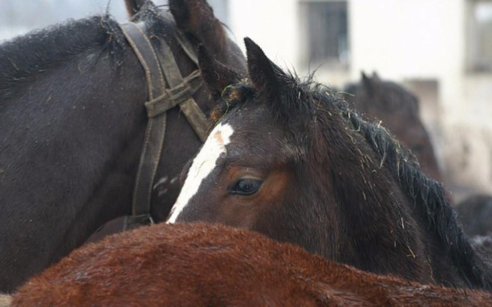 Zbiórka 5 koni, 2 tygodnie, 10 000 zł - zdjęcie główne