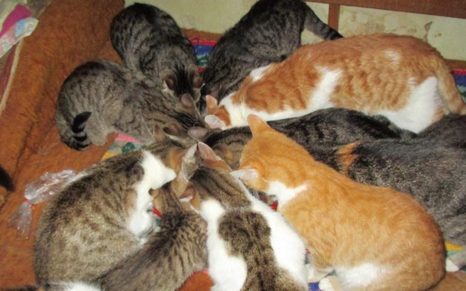 Zbiórka Koty z trzeciego piętra - zdjęcie główne