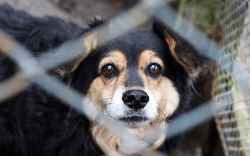 Zbiórka Psie leczenie, wiosenne porządki - zdjęcie główne
