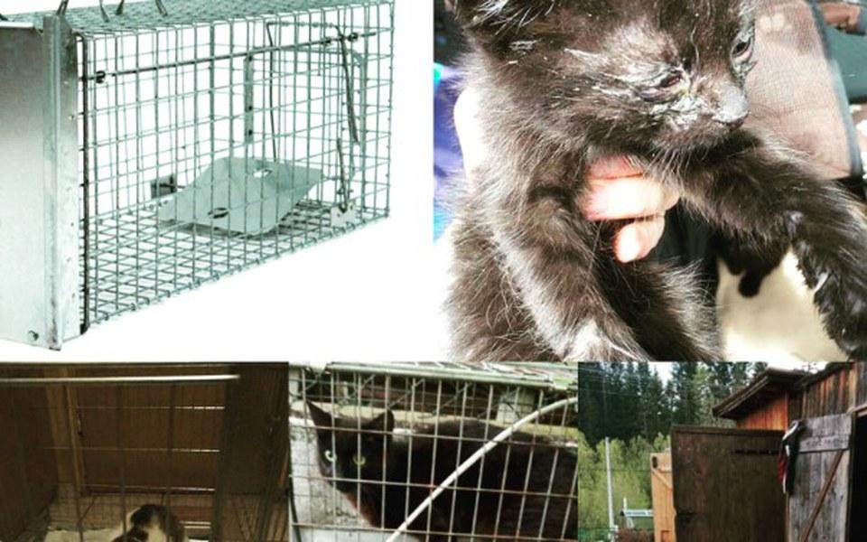 Zbiórka Klatki Łapki dla kotów - zdjęcie główne