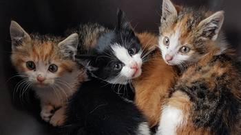 Zbiórka Kociaki z wraku auta - leczenie - miniaturka zdjęcia