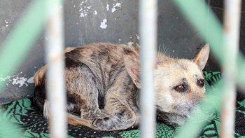 Zbiórka Ostatni pisk rozpaczy 50 psów - miniaturka zdjęcia